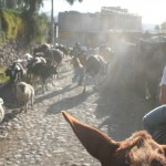 hest-og-dyr